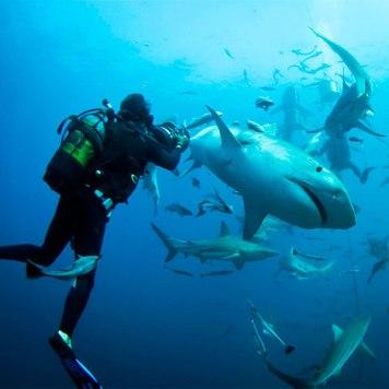 sharks-diving.jpg